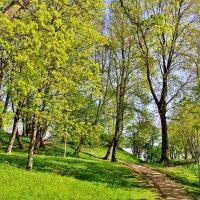 Цветение клёнов в парке :: Aida10