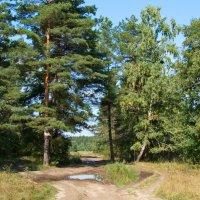 Лесные дороги :: Alexs Klinkov