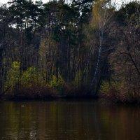 Тёплый апрель, когда в воздухе пахнет весной, тепло, солнечно и зелёная дымка окружает деревья... :: Ольга Русанова (olg-rusanowa2010)