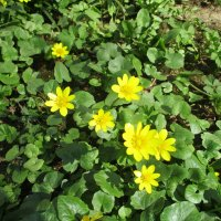 Апрельские цветы. :: Зинаида