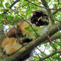 Весенние коты :: Liliya Kharlamova
