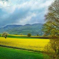 когда весна на белом свете... :: Elena Wymann