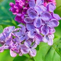 Пора цветения :: N93RUS