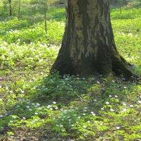 Весенний лес :: Людмила