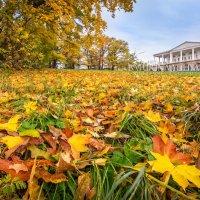 Листья в парке :: Юлия Батурина
