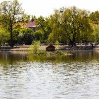 озеро Летнее Калининград :: Юрий Шамсутдинов