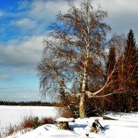 На реке Сосьве, зимняя рыбалка :: Борис Соловьев