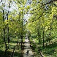 Аллея Нескучного сада :: Лидия Бусурина