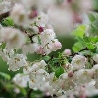 Весна кругом и на душе весна... :: Инга Энгель
