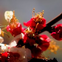 весеннее разноцветье 3 :: Александр Прокудин