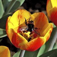 Пчёлка :: Nikolay Monahov