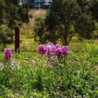 Персидская весна :: Aggel