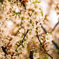 Усеяна цветами :: sorovey Sol
