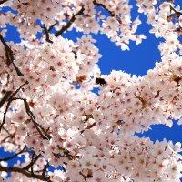 """""""...с весенним блюзом""""...Поздравляю с Днём весны и труда! :: Mila ."""