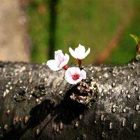 """""""...вдохновенье дарят нам цветы""""...Поздравляю с Днём весны и труда! :: Mila ."""