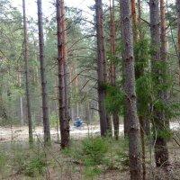 Лес в апреле :: Натала ***