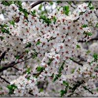 Весна Май. :: Ольга Митрофанова