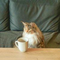 За чашкой кофе :: Александр