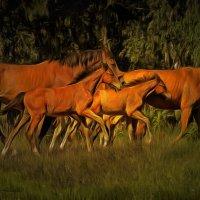 Ходят кони.............. :: Tatiana Markova