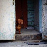 Чужие здесь не ходят... :: emaslenova