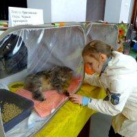 Лизутка на выставке кошек. :: Елизавета Успенская