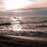 утро на берегу черного моря :: Анна Лищук