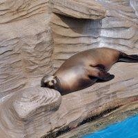 Зоопарк Нагоя Япония :: Swetlana V