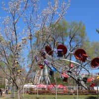 Головокружительная весна :: Марина Белоусова