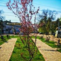 Четыре сезона-Весна :: Таня Ревва