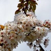 Spring :: Ирина Божко