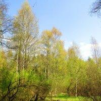 В весеннем лесу :: Андрей Снегерёв