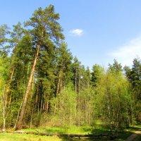 По дорожке в весенний лес :: Андрей Снегерёв