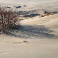 Тени на песке. :: LIDIA V.P.