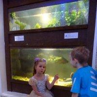 Обсуждение у аквариума . :: Елизавета Успенская
