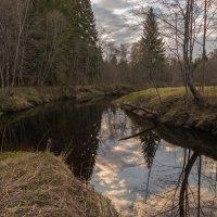 Весенний лес :: Владимир Брагилевский