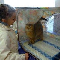 На выставке кошек. :: Елизавета Успенская