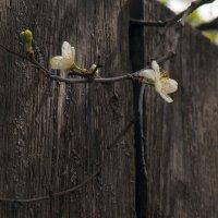 Весна на дворе... :: Александр Орлов