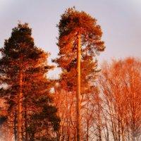 закат охватил верхушку деревьев :: Георгий А