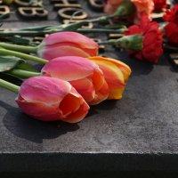 Вечная Память :: Наталия Григорьева