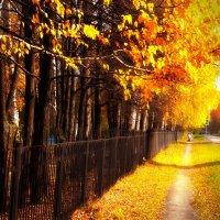 Супер золотая осень - супер золотая.. :: Сергей Фатеев
