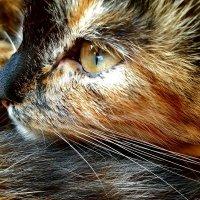Кошка :: Анастасия Мелькова