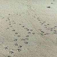 Пляж II :: Владимир Самсонов