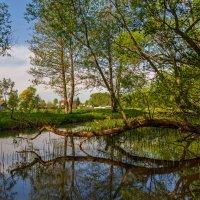 Майское утро на реке :: Андрей Дворников