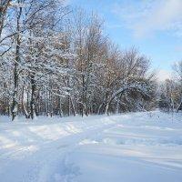 Зимняя дорога :: Анастасия Софронова