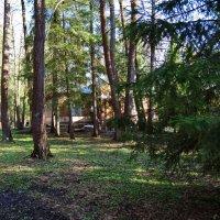 дом в лесу :: Валентина. .