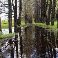 После дождя :: владимир тимошенко