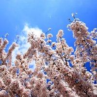 """""""Весна...Любовь земли и прелесть года !"""" :: Mila ."""