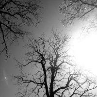 Деревья в небе :: Анастасия Мелькова