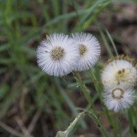 Весна пришла :: marmorozov Морозова