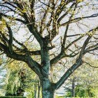 Дерево жизни :: Ciprian Pascal